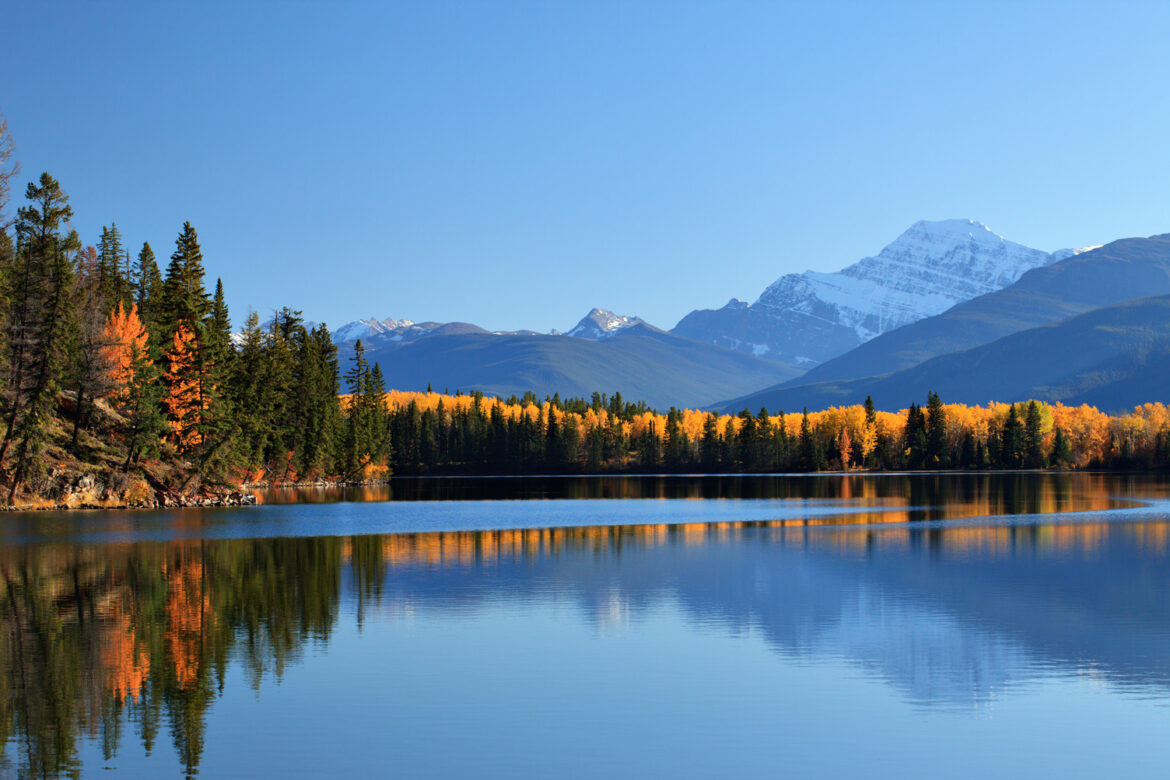 Fall Foliage in Jasper National Park